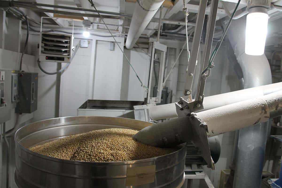 Grain Going into Mill